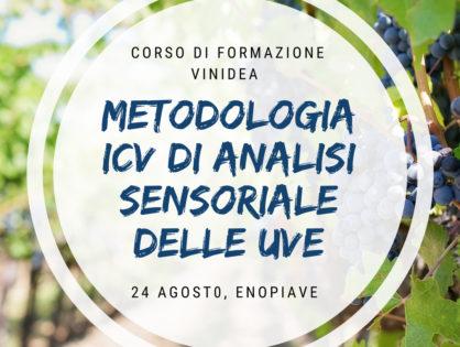 Metodologia ICV di analisi sensoriale delle uve – Modulo Metodica Applicata